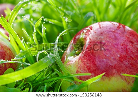 red apples  - stock photo