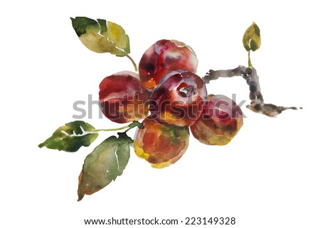 Red apples bunch on the tree twig original watercolor on paper isolated illustration - stock photo