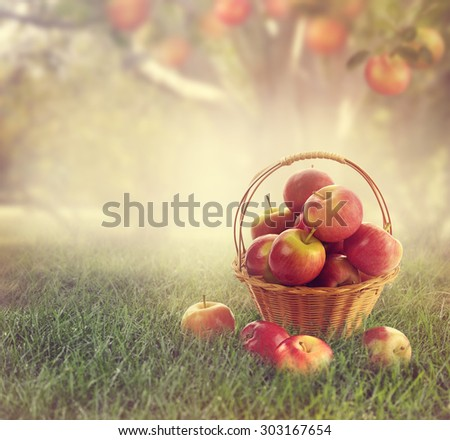 Red Apples in a Basket in a Garden - stock photo