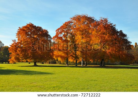 Red autumn beeches - stock photo