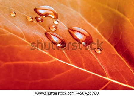 red autumn leaf background with water drops - stock photo