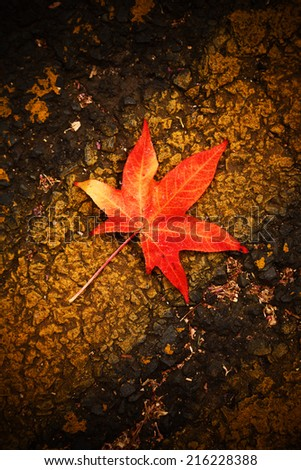 Red autumn leaf fall on asphalt background - stock photo