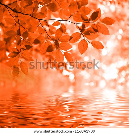 Red autumn leaves reflecting in the wate