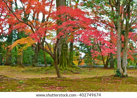 Red autumn maple leaves in Tokyo, Japan - stock photo
