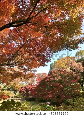 Red autumn trees.