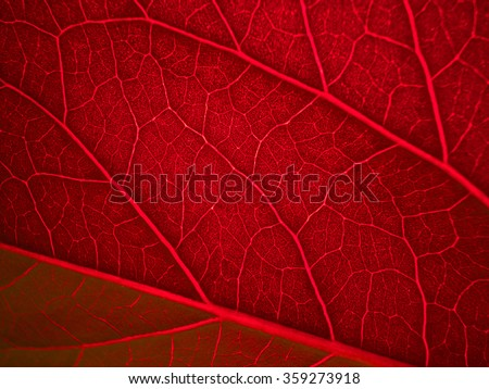 red back lit leaf ribs