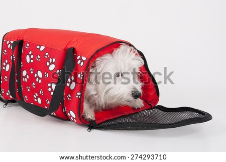Red bag for transporting pets pet inside - stock photo