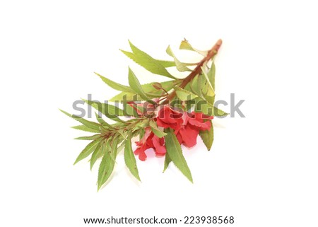 red balsam