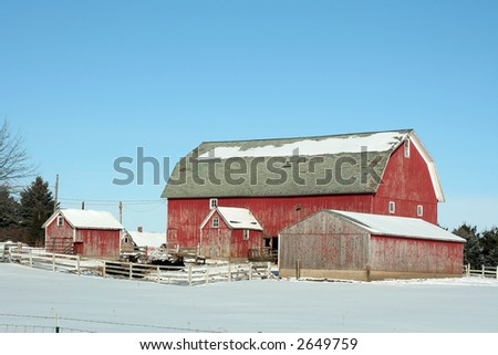 Red barn with cattle sits amid pure white show
