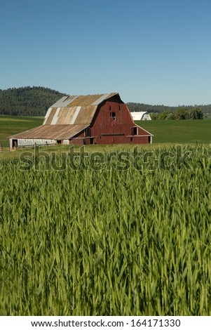 Red Barn With Metal Roof in Field of Green Wheat - stock photo