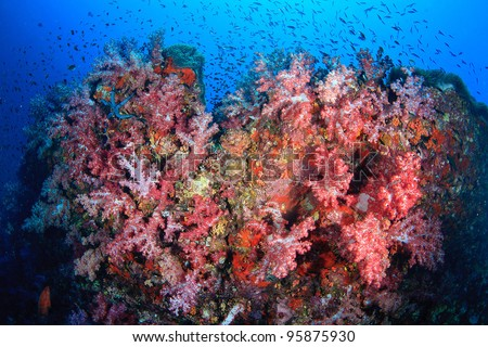 Red beautiful soft coral underwater - stock photo