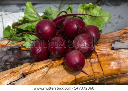 Red beet (Beta vulgaris). Bunch of fresh beetroots with green leaves. - stock photo