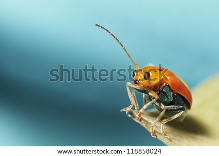 Red beetle - stock photo