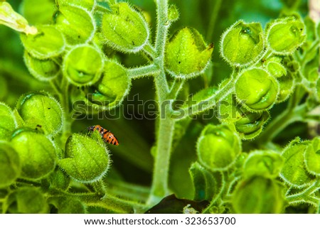 Red Beetle Sitting On Green Buds In Nature - stock photo