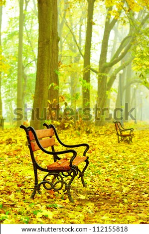 Red benches in a beautiful autumn park with fallen leaves