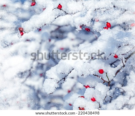 Red berries and snowy branch - stock photo