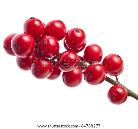 red berries holly isolated on white  background - stock photo