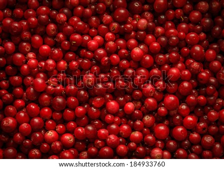 red bilberry background - stock photo