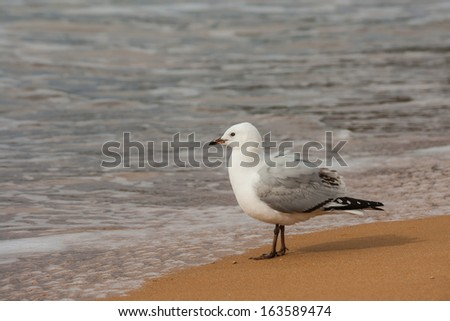 red-billed seagull and sea - stock photo