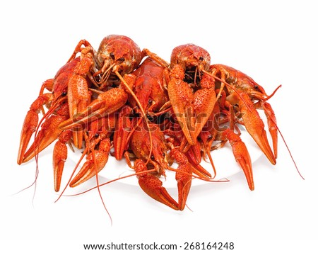 red boiled crawfish on a white background - stock photo