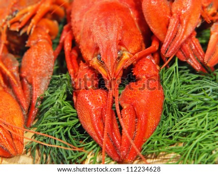 Red boiled crawfishes and green dill on a woden board taken closeup.