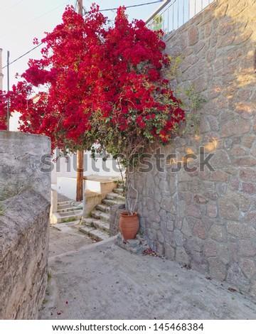 red bougainvillea in mediterranean village street - stock photo