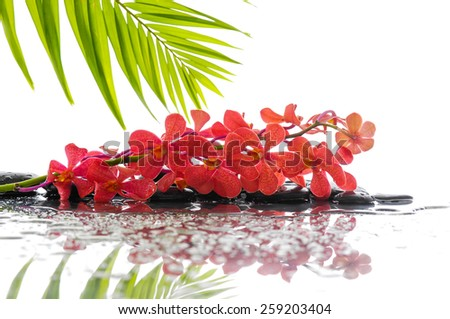 Red branch orchid and wet black stones with bamboo leaf - stock photo