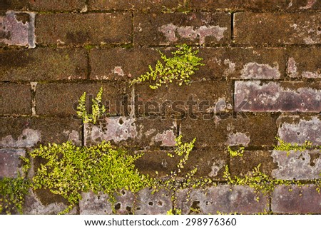 Red brick wall, Background of brick wall texture