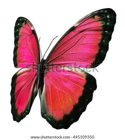 red butterfly - stock photo