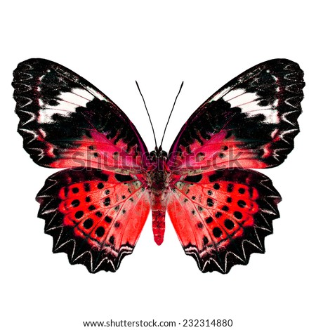 Red Butterfly (Leopard Lacewing Butterfly) upper wing profile in fancy blue color isolated on white background - stock photo