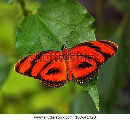 Red butterfly on the leaf - stock photo