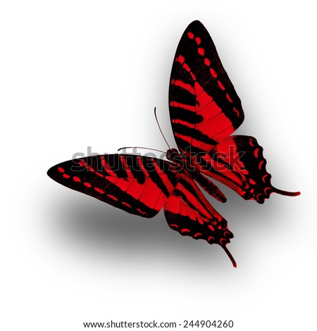 Red butterfly upper wing profile flying up - stock photo