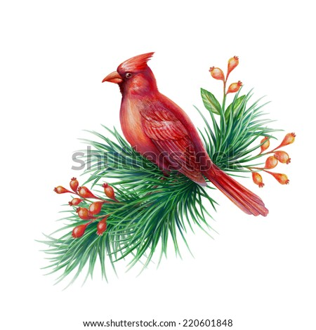 red cardinal bird with pine branch and berries, watercolor illustration isolated on white background - stock photo