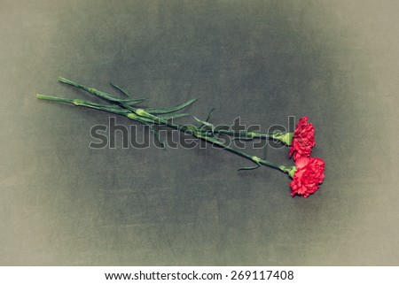 red carnation flowers on a dark vintage background - stock photo