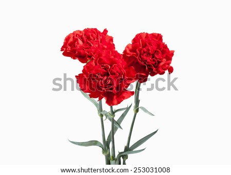 Red carnations bouquet - stock photo