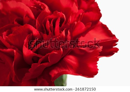 Red carnations bouquet macro - stock photo