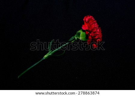 Red carnations flower isolated on black background - stock photo