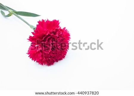 Red Carnations flowers isolated on white background, Selective focus. - stock photo