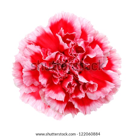 Red carnations on white - stock photo