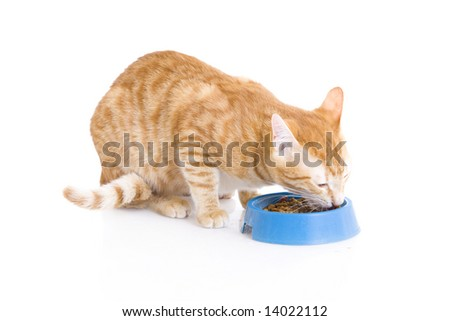 Red cat a eating forage isolated on a white background