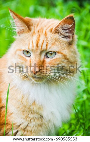 Red cat eating green grass outdoors