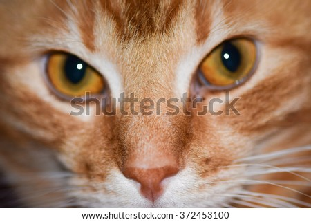 Red cat eyes - stock photo