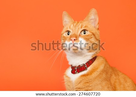 red cat holding in arms on orange background - stock photo