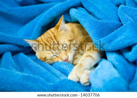 red cat in a blue blanket - stock photo