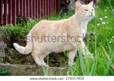 red cat in a meadow - stock photo