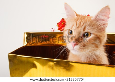 red cat in gift box - stock photo