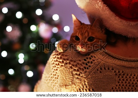 Red cat in hands near Christmas tree - stock photo