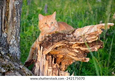 Red cat is sitting on a broken tree in the forest in the summer in Sunny day - stock photo