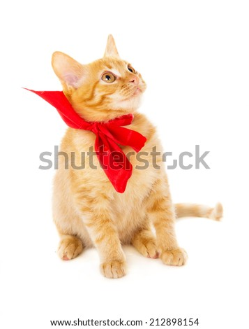 red cat is sitting on the floor in the red ribbon isolated on white background