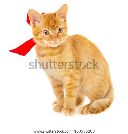 red cat is sitting on the floor with ribbon isolated on white background